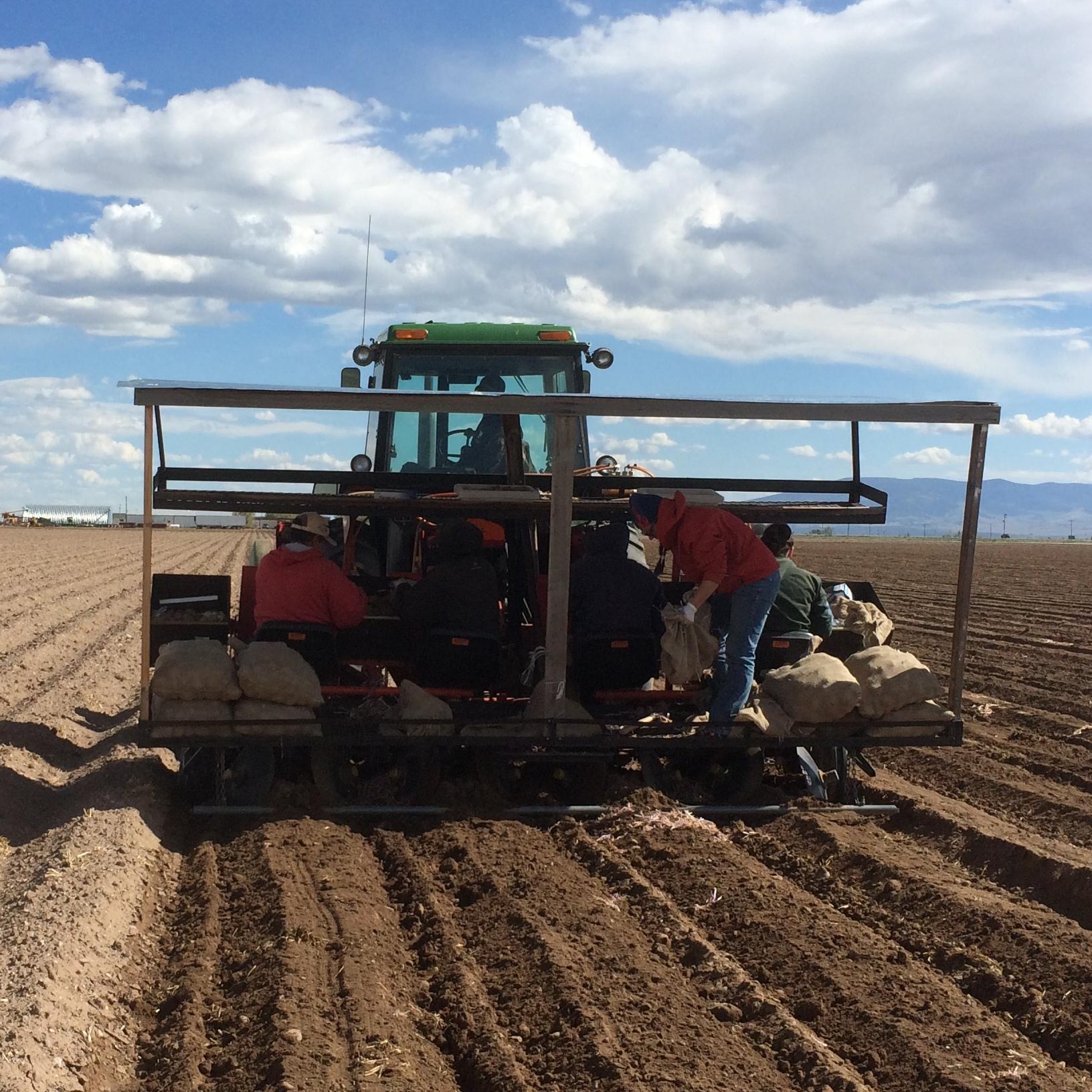 Four Row Potato Planter