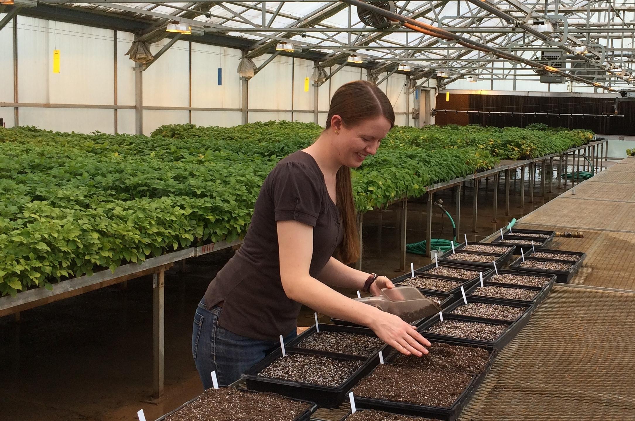 Planting TPS